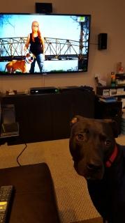 Watching Pit Bulls and Parolees.